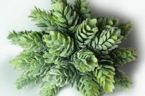 6″ Tall Agave Plant Capensia Bush, Artificial Plant