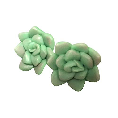 Top 10 Succulents Real Plants – Built-In Dishwashers